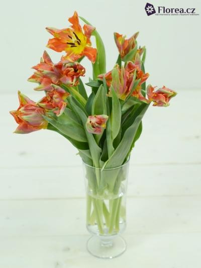 Tulipán PA ORANGE ROCOCO 30cm/18g