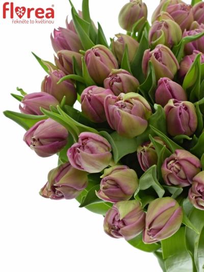 Tulipán DU DOUBLE PRINCES 35cm/25g