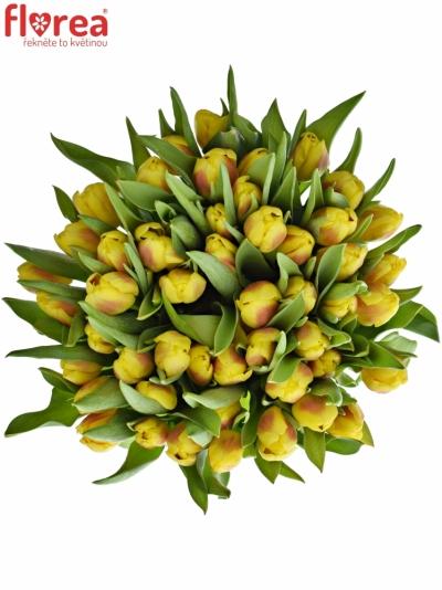 Tulipán EN BRIGITTA