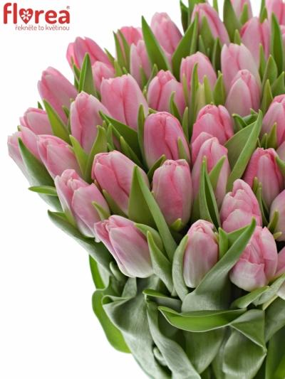 Tulipán EN DYNASTY 40cm/30g