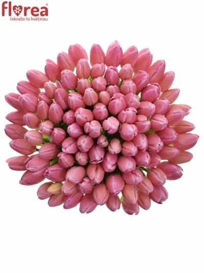 Tulipán EN JUMBO PINK 42cm/37g