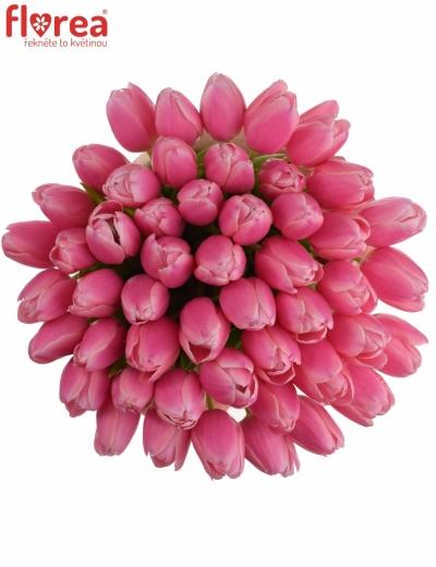 Tulipán EN MILKSHAKE