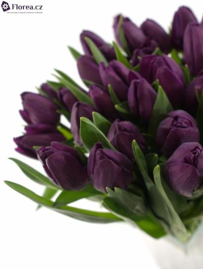 Tulipán EN NEGRITA