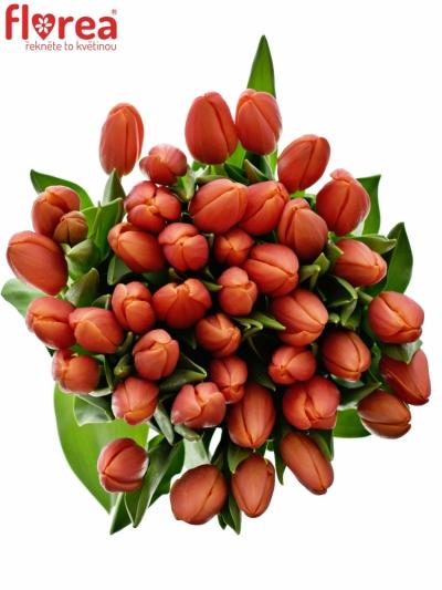 Tulipán EN ORANGE JUICE 35cm/30g