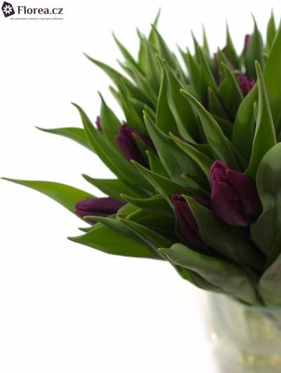 Tulipán EN PURPLE PRINCE