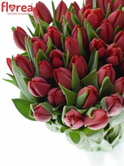 Tulipán EN SEADOV