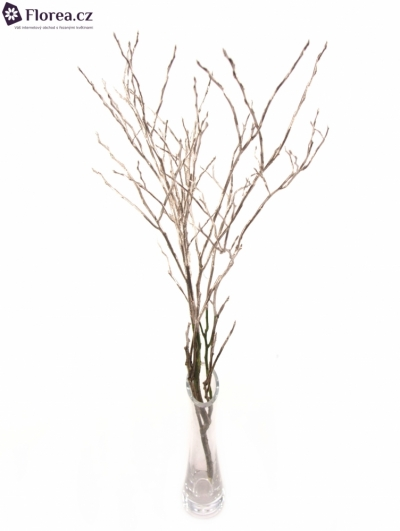 VACCINIUM PLATINUM 50cm
