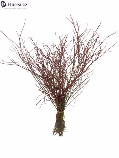 VACCINIUM RED 50cm