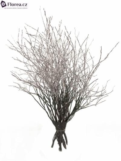 VACCINIUM SILVER 50cm