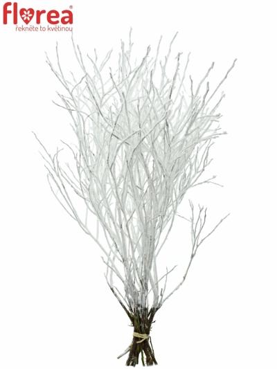 VACCINIUM SNOW 60cm