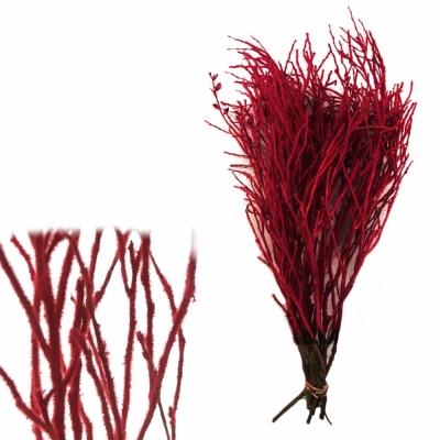VACCINIUM VLOK RED