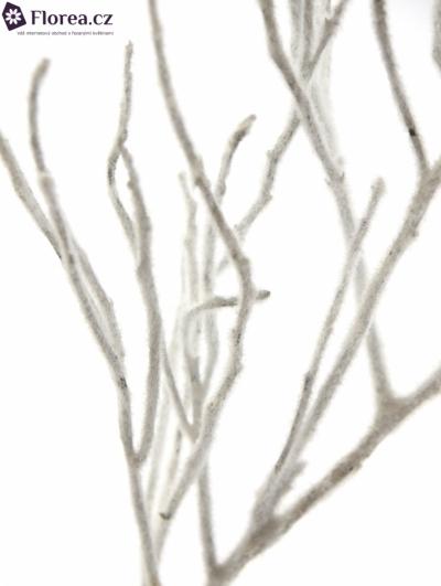 VACCINIUM VLOK WHITE