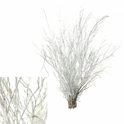 VACCINIUM WHITE
