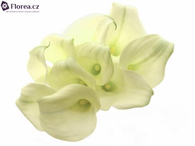 ZANTEDESCHIA CRYSTAL BLUSH 40cm