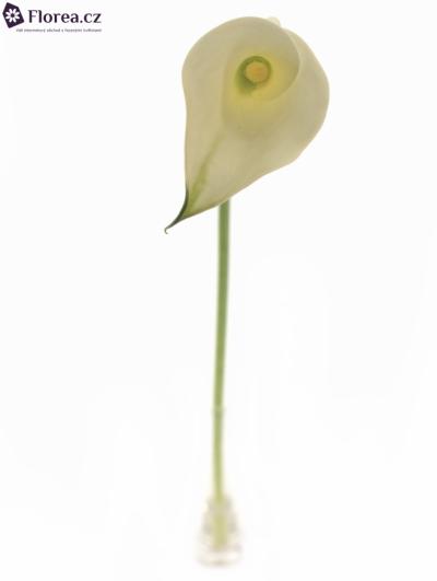 Kala WHITE IDEAL 65cm