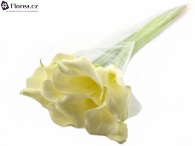 ZANTEDESCHIA WHITE SOX 55cm