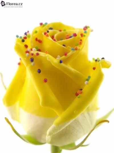 Žlutá růže CHOCO DREAM