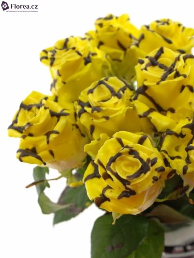 Žlutá růže CHOCOLAT STRIP YELLOW