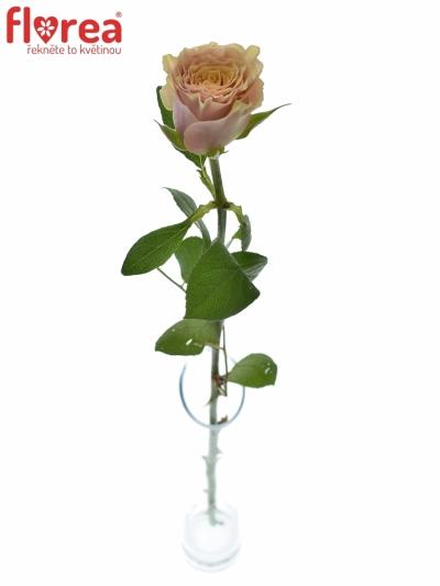 Žlutá růže MABELLA 70cm (XXL)