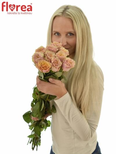 ROSA MABELLA 70cm (L)
