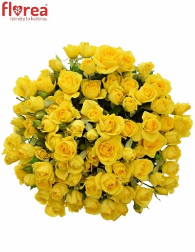 Žlutá růže MARISA 50cm/4+ (S)