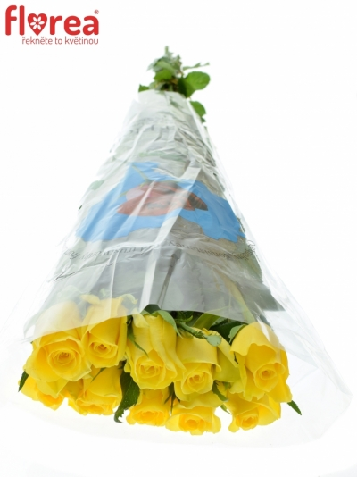 ROSA MOONWALK 80cm
