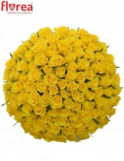 Sto žlutých růží MOONWALK