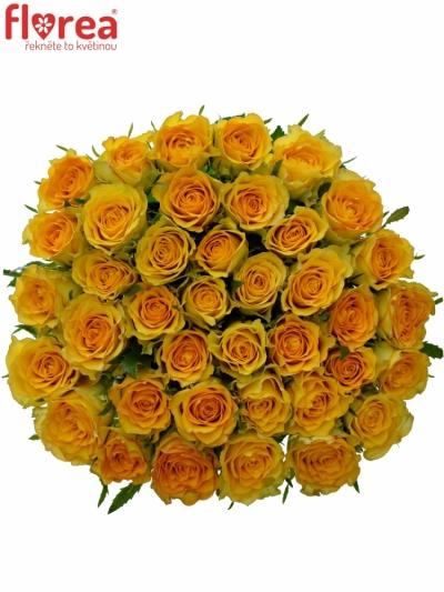 Žlutá růže Paco! 50cm (M)