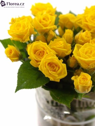 Žlutá růže SHINE