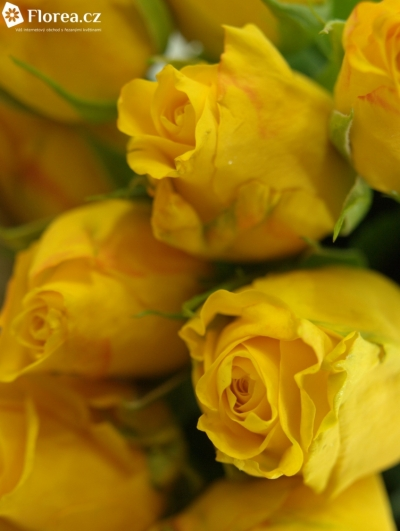 ROSA SPOTLIGHT 55cm