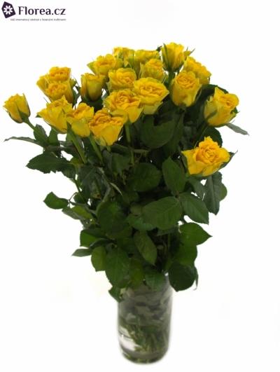 Žlutá růže VIVA 40cm