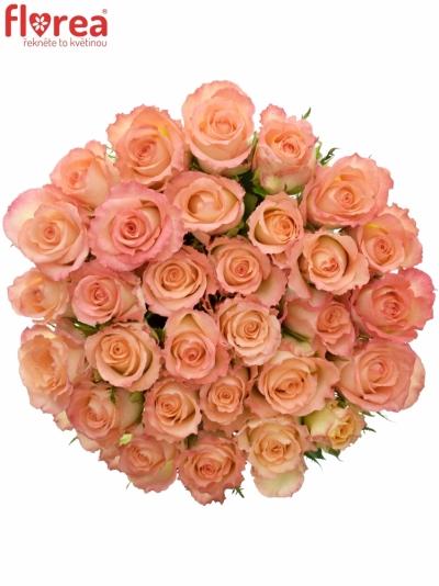 Žlutooranžová růže ANTIQUE DUETT 50cm