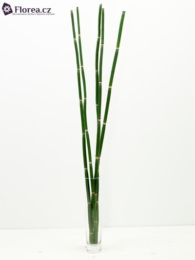 BAMBOO 70cm