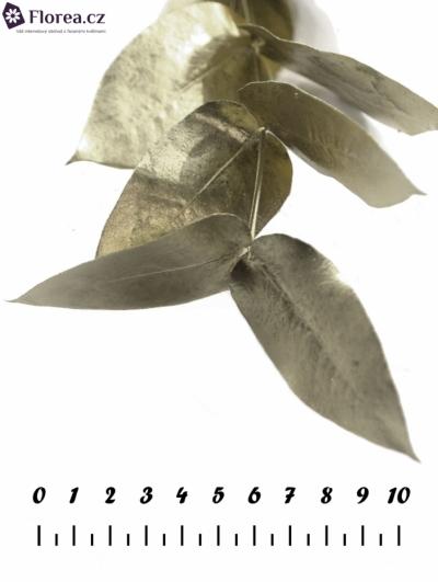 EUCALYPTUS ROBUSTA PLATINUM 200g