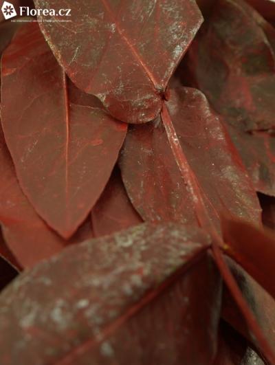 EUCALYPTUS ROBUSTA RED 200g