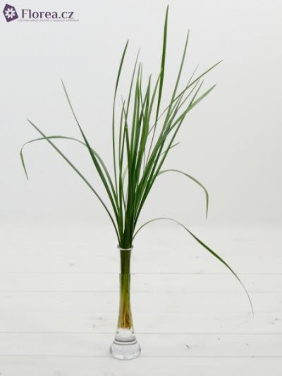 GRASS LILLY GRASS 70cm