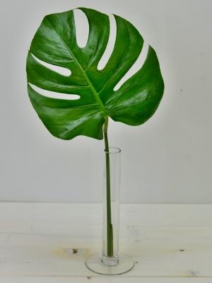 MONSTERA 40cm Ø10cm
